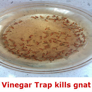 54 Ways To Get Rid Of Gnats In The House Kitchen And