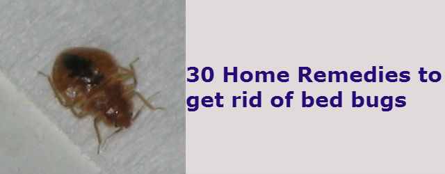 30 Home Remedies to get rid of bed Bugs from your house