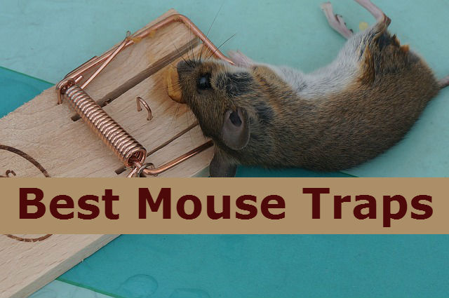 Best mouse traps to kill rats and mouse