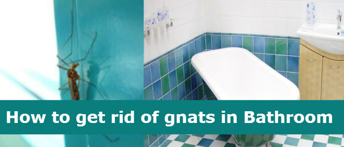 Gnats in Bathroom