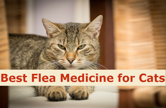 Best Flea Medicine for Cats