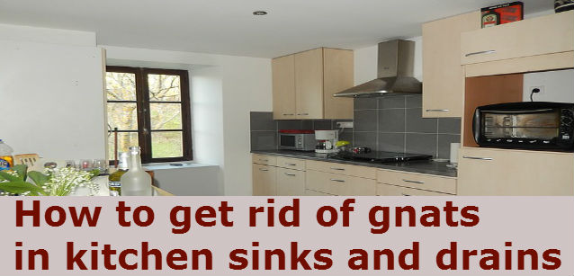 How to get rid of gnats in the kitchen sink