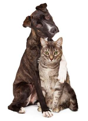 Best Tick Repellent for Dog and Cat