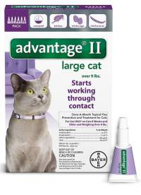 The Best Chewable Flea Medicine For Cats