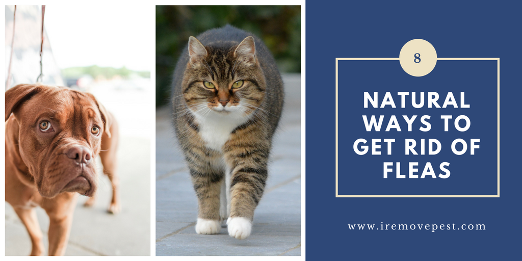natural ways to get rid of fleas on dogs and cats